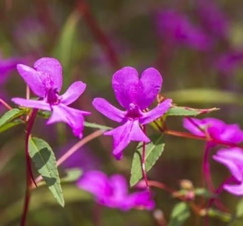 6 ทุ่งดอกไม้หน้าฝน ชวนไปยลความงามของป่า